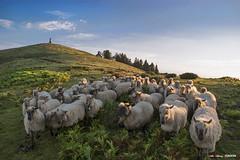 Ovejas en Saibi (Jabi Artaraz) Tags: jabiartaraz jartaraz zb euskoflickr ovejas rebaño artaldea saibi urkiola