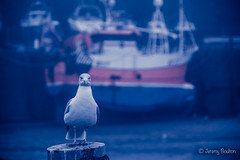 Fishing Bird (JKmedia) Tags: seagull herring gull boultonphotography 2017 ilfracombe cornwall boat harbour cornish post perch misty fog dank looking