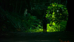 Waipio (1) (BoyUtot) Tags: waipiovalley waipiofalls waimea surfing hiking trekking dronephotography mavic panasonicgh1 hawaii bigisland lumix 100300mm travel nature landscape seascape honokaa ramesesmendoza