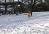 17/365 (moke076) Tags: 2018 365 project 365project project365 oneaday photoaday nikon d7000 moose great dane dog animal running snow atlanta ga cabbagetown esther peachy lefevre park snowy ground winter weather south playing