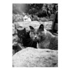 Cats (Blackcat71) Tags: cats feral fur outdoor park bench stone portrait bw black white flare attitude stare fuji x10 grain detail close candid moment