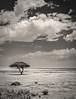 PB101945 (Kaba264) Tags: olympus mft mzuiko namibia bw sw etosha safari
