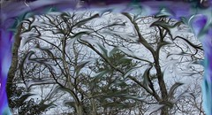 Winds gone wild (Rosemary Armel) Tags: wind tree trees nature windy