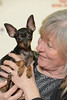 BIR Russkiy Toy Terrier GRP 3: NORD JV-16 SE JV-16 SE V-16 Krutyshka Olimpiyskiy Ogon (Svenska Mässan) Tags: best race mydog hundmässa bir