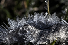 Growing Ice Crystals (Klaus Ficker --Landscape and Nature Photographer--) Tags: ice crystals icecrystals cold nature beauty winter closeup macro kentuckyphotography klausficker canon eos5dmarkii tamron180mmmarco