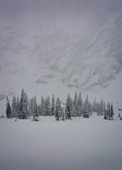 Strength in numbers. Heather Lake, Mt Baker-Snoqualmie National Forest (plottsdaniel) Tags: whitewalkers thewall got snowing snow winter pacificnorthwest pnw washington northamerica america nikond7100 nikkor nikon hike hiking northcascades heatherlake