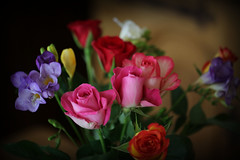Flowers (kimsfotos) Tags: roses columbine garden red yellow blue peach white pink purple dahlia daisy gebera lily lilac peony violet