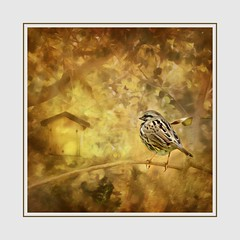 Home Sweet Home (Christina's World-) Tags: painterly digitalpainting digitalart dramatic bird birdhouse textures trees nature naturepreserve garden gold goldenhour golden leaves sparrow smallbird frame artistic brightcolors bright california creative colorful colors impressionistic landscape outdoors plants painting square sandiego scenic texture tree unitedstates usa vegetation view yellow home house woods