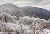 RIME BEAUTY (Larry W Brown) Tags: rimeice frost shenandoahnationalpark winter mountains virginia rime frozenfog icecrystals hawksbillmountain nakedtopmountain