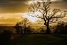 37/365 - Sunshine after the rain.. (EYeardley) Tags: landscapephotography landscape misty mistylandscape sunshineaftertherain sunshine cloudysky clouds hazy trees countryside englishcountryside uk welshfrankton shropshire nikon nikon50mm 50mm nikond3300 d3300 nikonphotography 365 3652018 day37 6thfebruary2018 lensflare
