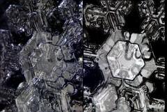 7feb18F (peterobrien186) Tags: 3d stereo macro snow snowflake snowcrystal crystal crossedpolarized polarized crosseye winter center topography