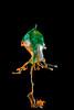 AAA_4091 (Angelo M51 (Angelo Metauri)) Tags: stilllife waterdrops water waterdrop liquidsculpture liquid liquidart fluids fluid angelom51 artliquid drops speed watersculpture macro mcroliquid