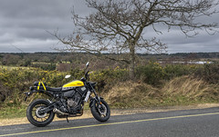 soa4 (Antony Ward UK) Tags: yamaha xsr motorbike 60th anniversary kenny roberts 700 yellow ride out new forest dorset poole bournemouth