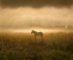 Warm Morning Light (adrians_art) Tags: horses foal equines wildlife pony wetlands marshlands sky clouds rays warm light dark yellow gold red orange black white amber sunrise dawn silhouettes shadows weather misty foggy