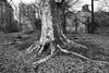 London Plane (Joe Josephs: 3,166,284 views - thank you) Tags: centralpark cityparks landscape landscapephotography nyc newyorkcity december joejosephs outdoor outdoorphotography peaceful quiet tranquil urbantravel urbanparks winter parks â©joejosephs2017 tree bw blackandwhite blackandwhitephotography ©joejosephs2017