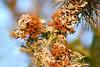 Texas Lichen (NaturalLight) Tags: lichen kickapoocavern statepark kickapoocavernstatepark texas