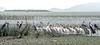 Ethiopia : Ziway Lake #1 (foto_morgana) Tags: africa afrika afrique analogphotography analogefotografie birds ethiopia ethnic ethnie etnia etniciteit lake nikoncoolscan omovallei omovalley outdoor photographieanalogue travelexperience vallebajodelomo valléedelomo vuescan water waterbirds waterfowl ziwaylake