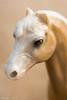 Macro Monday - Topic - Favorite Book (norasphotos4u) Tags: animals canon5dmkiv canonef100mmf28lisusmmacro macro macromonday pouporri social favoritebook