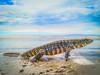 Lagarto na praia (Eduardo PA) Tags: curitiba paraná nokia pureview microsoft windows phone 950xl lumia wp lagarto na praia pontal do