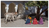 Scène de rue à Pushkar (Joce.V) Tags: inde india indedunord rajasthan northindia people personne vache cow femmes woman voyage travel pushkar streetphotography photoderue canon canoneos5dmarkii canonef2470f28lusm