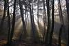 Wintersonne (NPPhotographie) Tags: nature art creative oberberg npp winter sun fog mist dust tree wood forest magic magical aoi elitegalleryaoi bestcapturesaoi