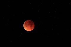Total Lunar Eclipse 5:27:23 (fksr) Tags: lunareclipse superbluebloodmoon night stars sky marinheadlands california marincounty astrometrydotnet:id=nova2421112 astrometrydotnet:status=solved