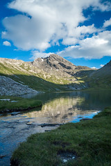 Au bord de Foréant (Macsous) Tags: france queyras montagne haute flower hautesalpes nature fleur paysage alpes arvieux