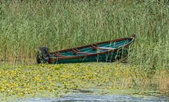 La barca... (bervaz) Tags: sony verde green irlanda ireland