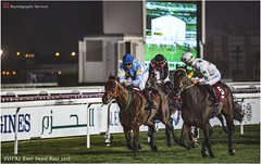 IMG_7176 copy (Services 33159455) Tags: qatar doha horse racing qrec emir horseracing raytohgraphy