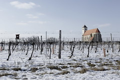 Frost (verblickt) Tags: winterscene frozen sunny cold farmland rural agrarculture agriculture viticulture church snow