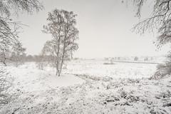 Winter wonderland (Rob Schop) Tags: wideangle dehamert f56 winter sonya6000 wit nederland outdoor bos snow sneeuw tree autumm limburg samyang12mmf20 forrest landschap a6000 arcen handhold landgoeddehamert