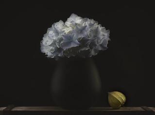 Hydrangea and vase