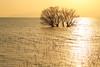 The golden moment (Teruhide Tomori) Tags: 滋賀県 琵琶湖 湖北 長浜市 日本 風景 日没 自然 nature landscape japan japon lakebiwa water sunset sky tree winter