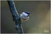 export_IMG_1040.jpg (Zi Ro) Tags: nationaalpark vogels hoge veluwe vogelhut schaarsbergen otterlo edelhert overige hogeveluwe