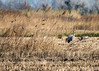 Campagne (Fabienne G) Tags: wildlife cranes grues naturephotography landscape provence camargue animals birds
