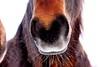 Ganz schön kalt heute... Brrrr (Antje_Neufing) Tags: pferd winter kalt schnee frost