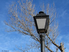 Pon una farola en tu vida (kirru11) Tags: farola árbol ramas cielo quel larioja españa kirru11 anaechebarria canonpowershot