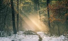 Winterlight (Guido de Kleijn) Tags: geulders gelderland speulderbos guidodekleijn nikond500 nikon1680f28 sneeuw snow forest bos dutch holland netherlands light lightrays sun sunrays sunlight woods
