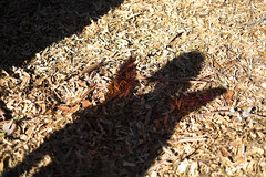DSCF8359 (Cutspark) Tags: delightfuldryad fairywings hiltcherpark