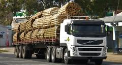 photo by secret squirrel (secret squirrel6) Tags: truck vehicle secretsquirrel6truckphotos craigjohnsontruckphotos australiantruck bigrig worldtruck truckphotos volvo volvofm pine heavy load visor