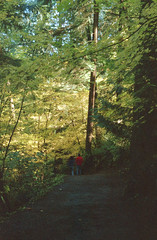 Trans Canada Trail 1 (jvde) Tags: 50mmf14nikkor burnaby coolscan film fujicolor400 gimp nikonfe