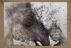 will-persih-with-you (Art Von Mart) Tags: enviromen endangered love man mood tragedy drawing photoart photoshop