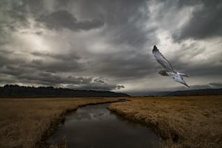Gray Ghost Landscape