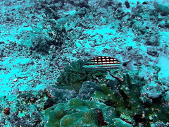 Fish (markb120) Tags: fish animal fauna diving water underwater coral sea