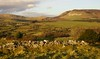 The rolling hills of Calry (flxnn) Tags: ireland landscape sligo landschaft paysages grassland rural beauty outdoors nature green hills mountains walls natural europe field 2018 grass
