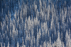 (Marie-Laure Even) Tags: 2017 amériquedunord arbre britishcolumbia canada colombiebritannique december detail décembre fjall forest forêt frozen hiver kootenaynationalpark landscape marielaureeven montagne mountain nature neige nikond7100 northamerica paysage roadtrip snow travel tree voyage white wild wilderness winter wood гора природа eastkootenayg