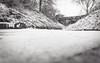 white noise (Zesk MF) Tags: bw black white mono winter noise zesk snow falling schnee trees bokeh 35mm 18