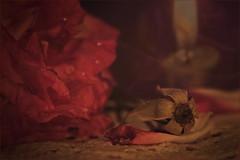 """Great Expectations"" (Kevin Rheese) Tags: greatexpectations charlesdickens novel fiction story pip estella misshavisham dickensian macromondays myfavouriteread love loss classic"