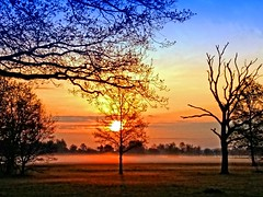 The reason why (Tobi_2008) Tags: bäume trees sonnenaufgang sunrise himmel sky landschaft landscape sachsen saxony deutschland germany allemagne germania