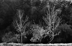 the Farmland (masamiy21) Tags: nara japan monochrome asahi pentax sl planar 5014 fuji acros100 adonalrodinal wood farmland